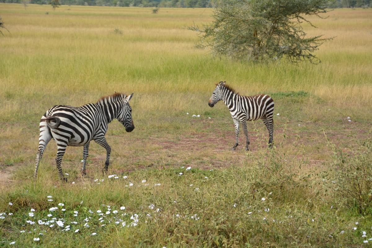Les parcs transfrontaliers à découvrir en Afrique