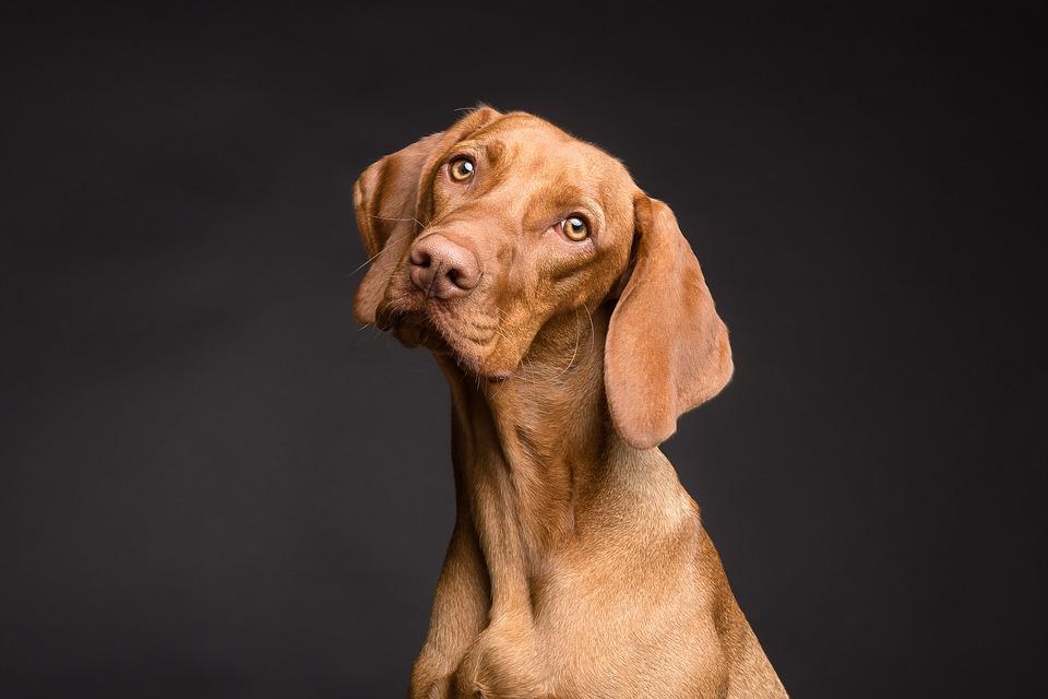 Comment choisir la bonne race de chien ?