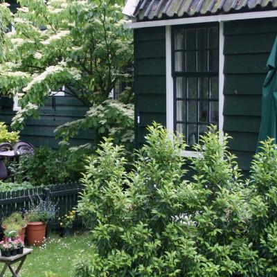cabane-jardin